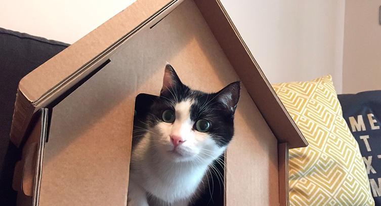 Casette di cartone per gatti qz regardsdefemmes