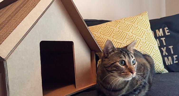 Giocattoli di cartone per gatti selfpackaging
